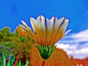 Un dia, una Flor