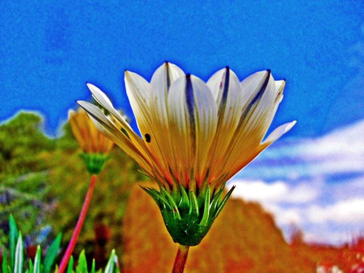 Arturo Carrión - Un dia, una Flor